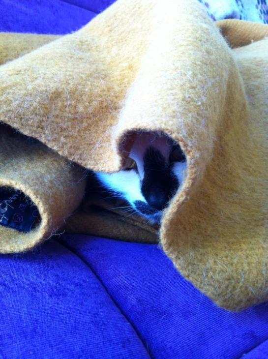 Kitty in a blanket