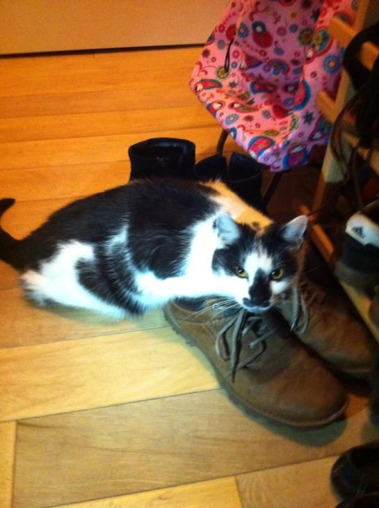 Kitty trying on shoes