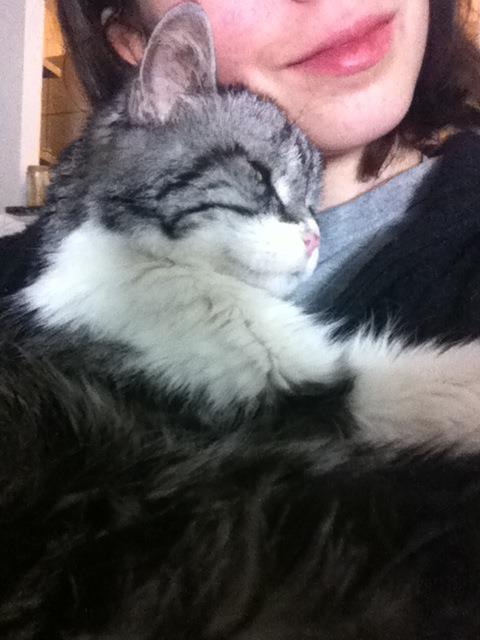 Cuddle Kitty