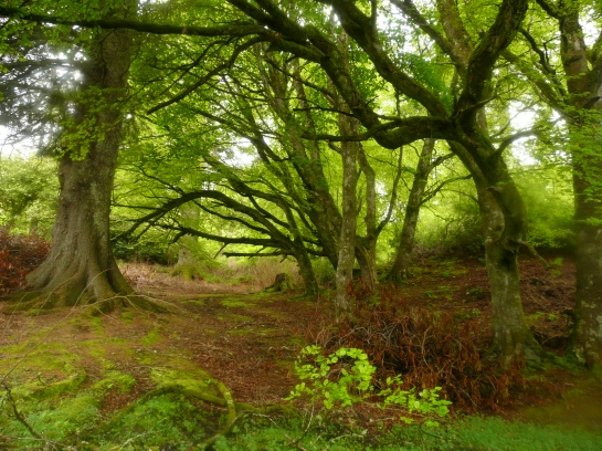 Woods in Stornoway